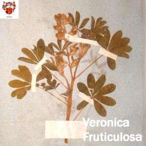 Foto_06_stanza_F_Veronica_Fruticulosa_per_sito_con_logo