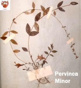 Foto_09_stanza_I_Pervinca_Minor_per_sito_con_logo